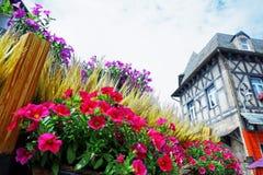 Piękni kwiaty azalii tło zdjęcia royalty free