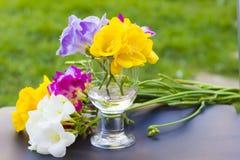 Piękni kwiaty frezi zakończenie up Zdjęcia Stock