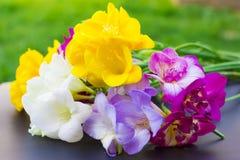 Piękni kwiaty frezi zakończenie up Zdjęcie Royalty Free