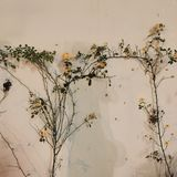 Piękni kwiaty i naturalne rośliny Kwiatu Garden Ilustracji
