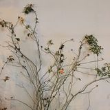 Piękni kwiaty i naturalne rośliny Kwiatu Garden ilustracja wektor