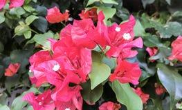 Piękni kwiaty kwitnie na ścianie garden_III fotografia stock