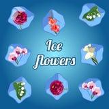 Piękni kwiaty marznący w kostkach lodu ilustracja wektor