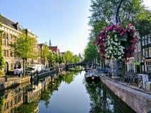 Piękni kwiaty nad wodnym kanałem zdjęcie royalty free
