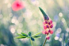 Piękni kwiaty od ogródu w atrakcyjnym lecie barwią obrazy royalty free