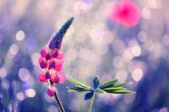 Piękni kwiaty od ogródu w atrakcyjnym lecie barwią zdjęcie stock
