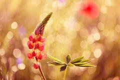 Piękni kwiaty od ogródu w atrakcyjnym lecie barwią zdjęcia stock