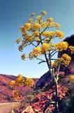 Piękni kwiaty ogród fotografia royalty free