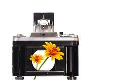 Piękni kwiaty patrzeć przez kamery żaluzi Zdjęcie Stock