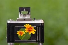 Piękni kwiaty patrzeć przez kamery żaluzi Zdjęcia Royalty Free
