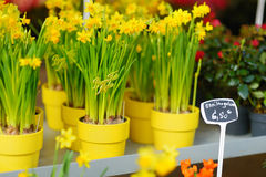Piękni kwiaty sprzedający na plenerowym kwiatu sklepie Zdjęcie Stock