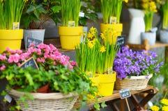 Piękni kwiaty sprzedający na plenerowym kwiatu sklepie Obraz Stock