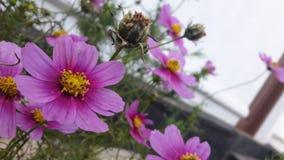 Piękni kwiaty w świacie fotografia royalty free