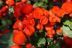 Piękni kwiaty w kwiacie fotografia stock