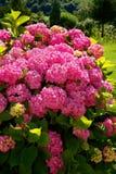 Piękni kwiaty w okwitnięciu, Montenegro zdjęcia stock