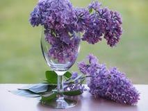 Piękni kwiaty w przejrzystym wina szkle obraz stock