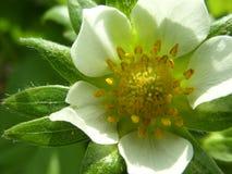 Piękni kwiaty w Rosja fotografia royalty free