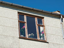 Piękni kwiaty w wazie okno Fotografia Royalty Free
