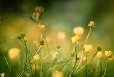 Piękni kwiaty w wiośnie Fotografia Royalty Free
