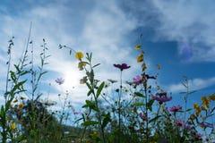 Piękni kwiaty z niebem jako tło przy Mon Przyskrzyniają, Chiang M obrazy royalty free