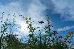 Piękni kwiaty z niebem jako tło przy Mon Przyskrzyniają, Chiang M fotografia stock