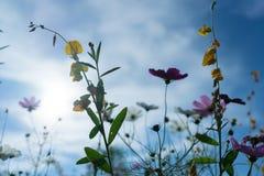 Piękni kwiaty z niebem jako tło przy Mon Przyskrzyniają, Chiang M zdjęcie royalty free
