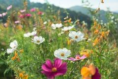 Piękni kwiaty z niebem jako tło przy Mon Przyskrzyniają, Chiang M obraz stock