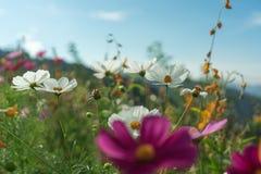 Piękni kwiaty z niebem jako tło przy Mon Przyskrzyniają, Chiang M obrazy stock