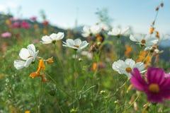 Piękni kwiaty z niebem jako tło przy Mon Przyskrzyniają, Chiang M obraz royalty free