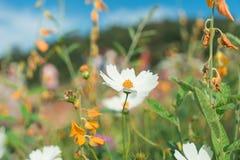 Piękni kwiaty z niebem jako tło przy Mon Przyskrzyniają, Chiang M fotografia royalty free