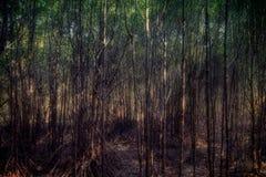 Piękni Lasowi drzewa z światłem słonecznym w drewnie Obrazy Royalty Free