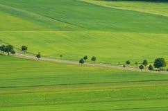 Piękni lato zieleni pola zieleni, krajobrazu drzewa i zdjęcia royalty free