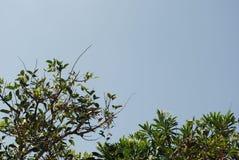 Piękni liście z niebieskim niebem zdjęcie royalty free