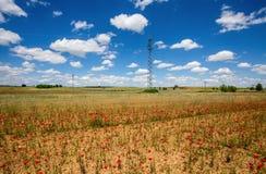 Piękni maczków pola z wysokim woltażu powerline przekazem górują obraz stock