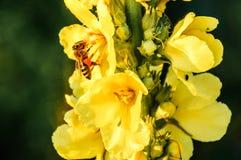 Piękni Makro- kolorów żółtych kwiaty obrazy royalty free