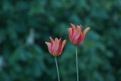 Piękni mali kwiaty które reprezentują piękno natura Natura jest wspaniała Frontowy widok Fotografia Royalty Free
