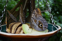 Piękni motyle Obraz Stock