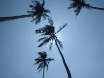 Piękni nieba z kokosowym drzewem lankijczyk fotografie obraz stock