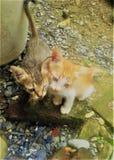 Piękni Niewinnie siostrzani koty ogląda ty obrazy stock