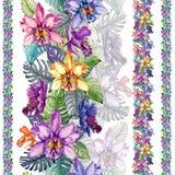Piękni orchidea kwiaty i monstera liście w liniach prostych na białym tle Bezszwowy tropikalny kwiecisty wzór Obraz Royalty Free