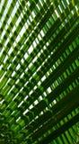 Piękni palma liścia wzoru tła obrazy royalty free