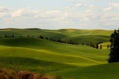 Piękni Palouse wzgórza zdjęcie stock