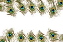 Piękni pawi piórka jako tło z tekst kopii przestrzenią Zdjęcia Royalty Free