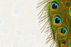 Piękni pawi piórka jako tło z tekst kopii przestrzenią Obrazy Royalty Free