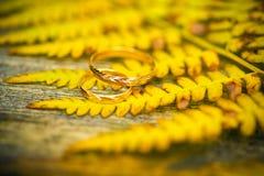 Piękni pierścionki na jesieni ulistnieniu obrazy stock