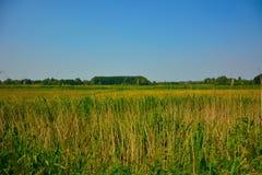 Piękni pola Flanders obraz royalty free