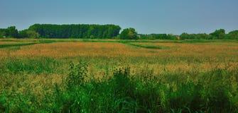Piękni pola Flanders zdjęcia stock