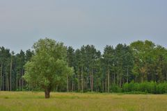 Piękni pola Flanders fotografia royalty free