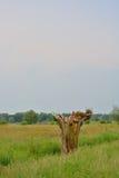 Piękni pola Flanders fotografia stock