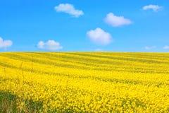piękni pola gwałcą wiosnę Zdjęcia Royalty Free